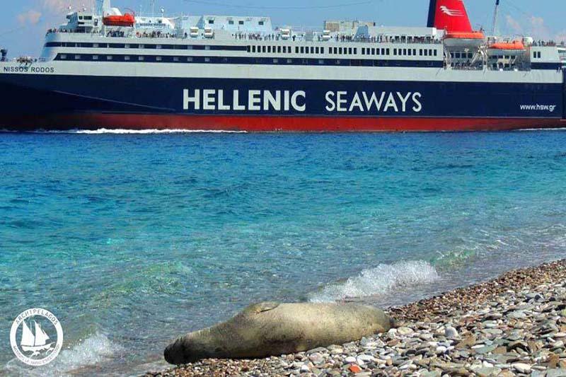 Hellenic-Seal Η Hellenic Seaways στηρίζει τη δράση του Αρχιπελάγους   Ψάρεμα  - Συζητήσεις - Σκάφος