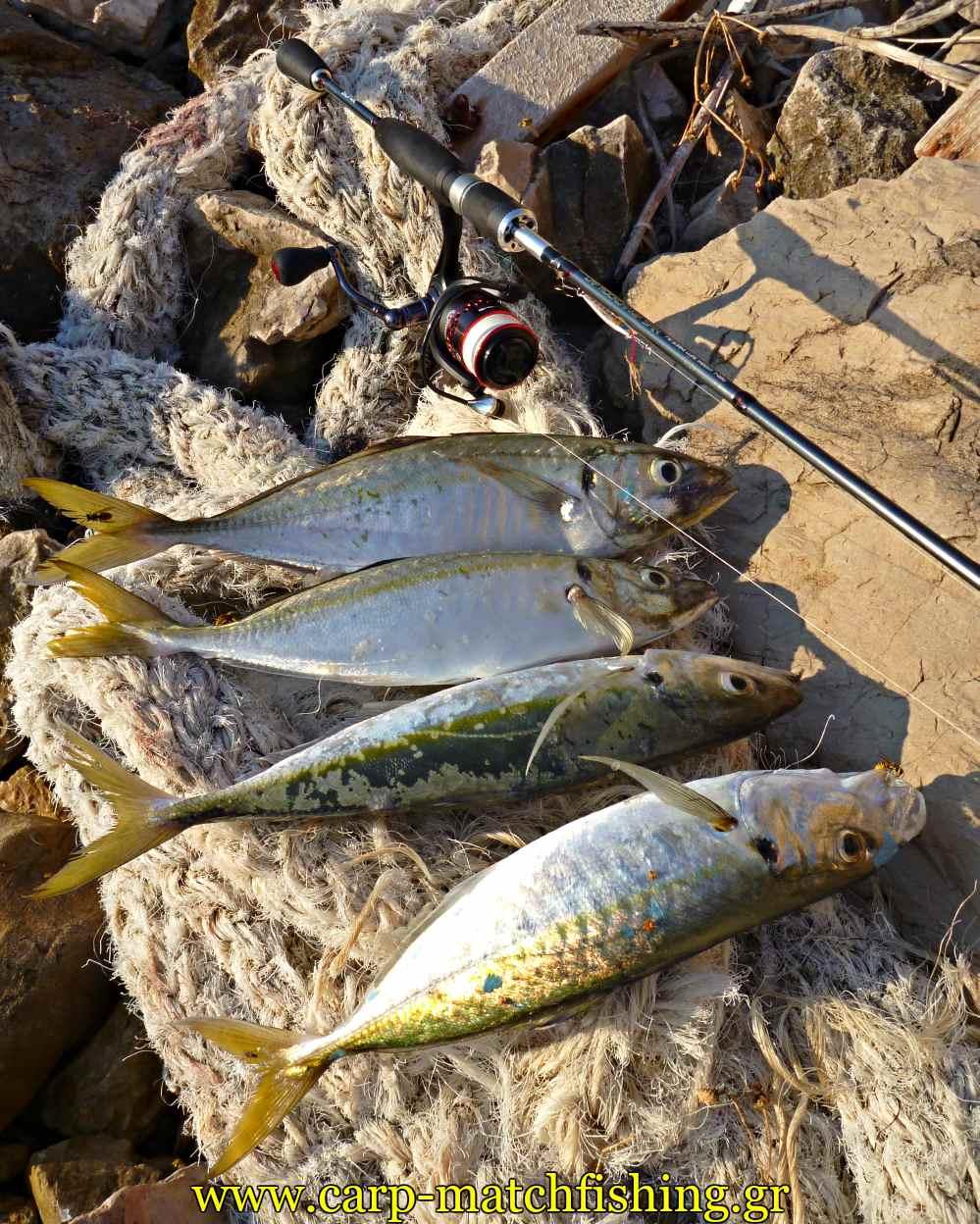 ajing-horse-mackerel-metal-jigs-kokkalia-4-carpmatchfishing