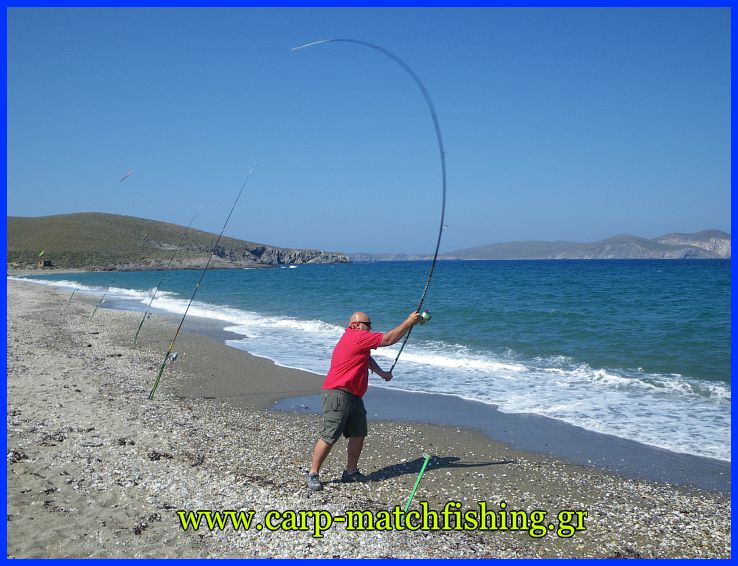 casting-voli-carp-matchfishinggr.jpg