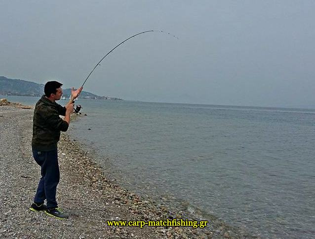 eging-cuttlefish-rod-papa-carpmatchfishing
