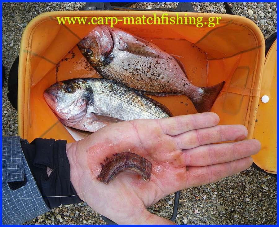 faraw-bait-tsipoures-carp-matchfishing-gr.jpg