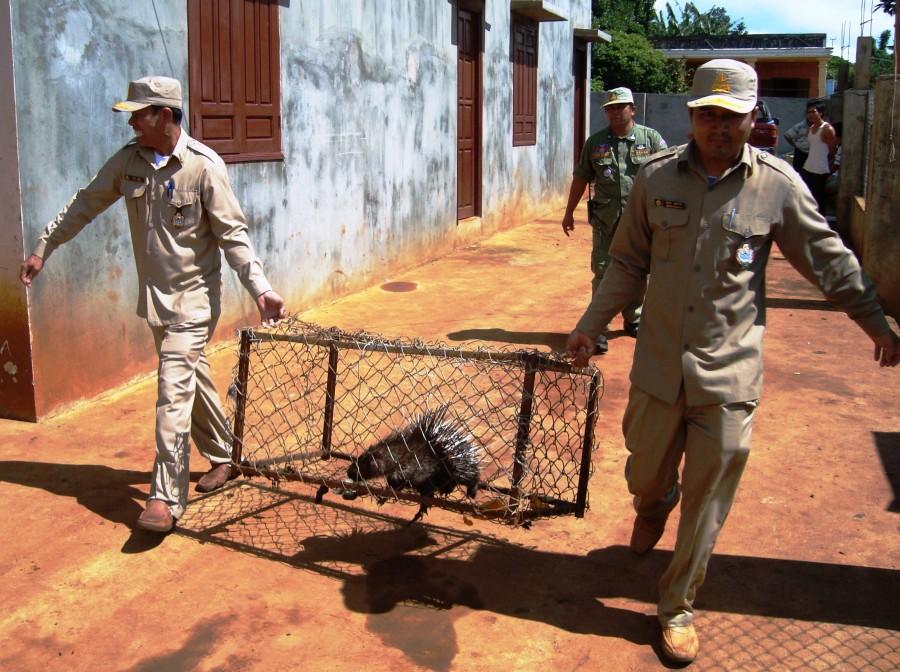 Rangers_release_porcupine Οι φύλακες της άγριας ζωής του πλανήτη   Ψάρεμα  - Συζητήσεις - Σκάφος