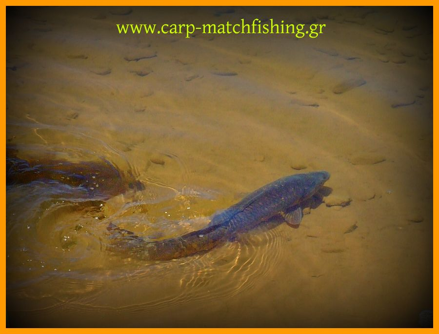 www.carp-matchfishing.gr. Catch and release