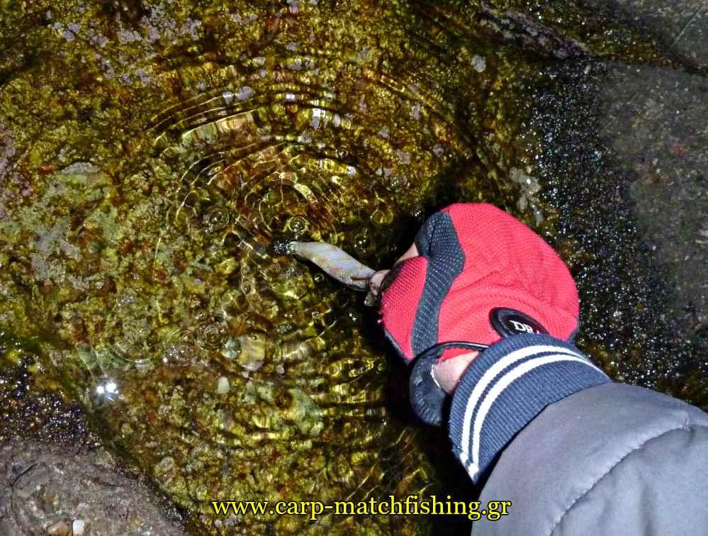 eging-cleaning-jig-fron-inks-carpmatchfishing