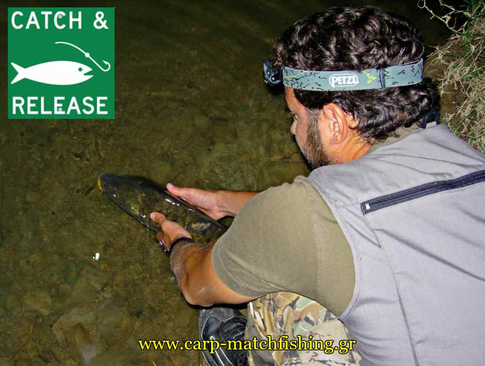 catch-and-release-carp-lake-sfaltos-carpmatchfishing