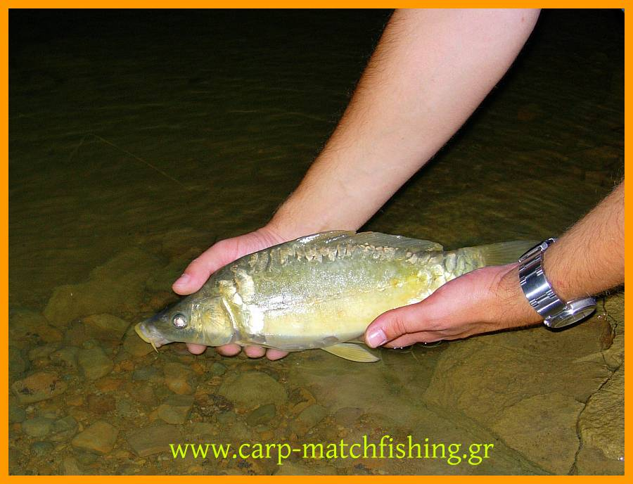 catch-and-release-little-carp.jpg