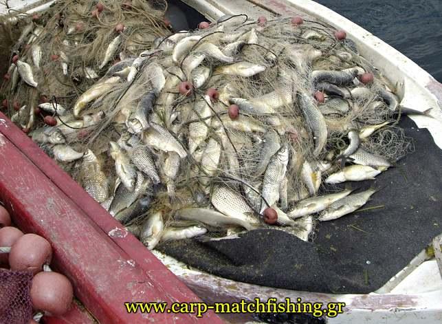 paranoma-dixtya-kristalize-carpmatchfishing