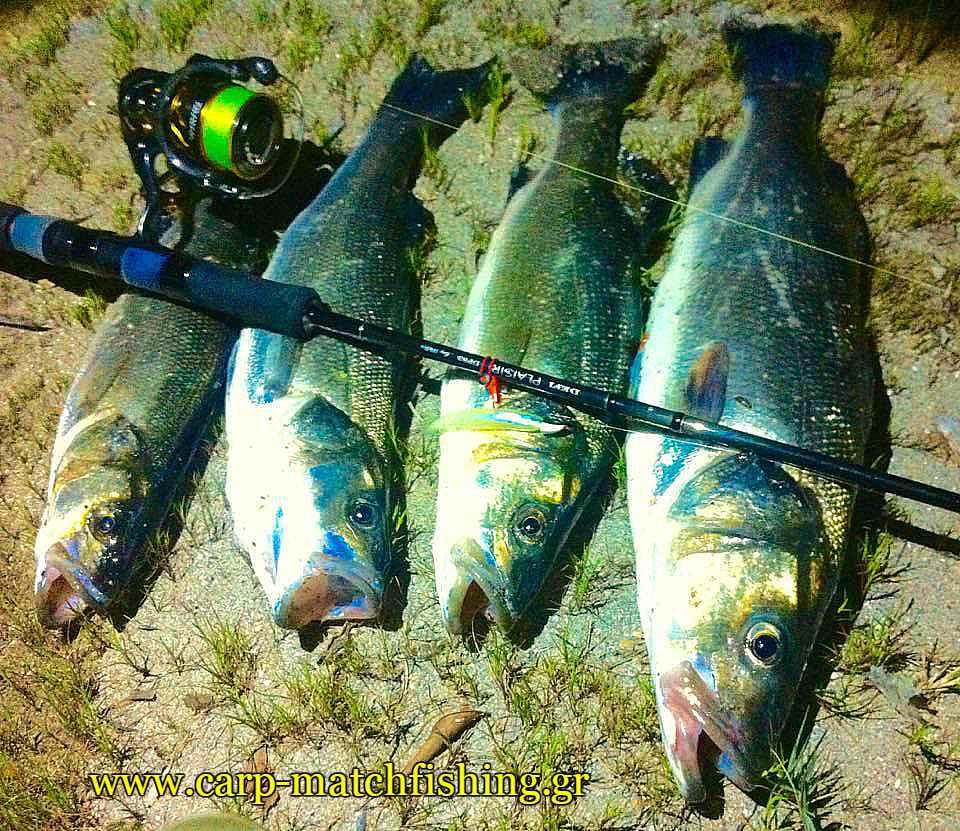 lavrakia-spinning-ekvoles-potamion-carpmatchfishing