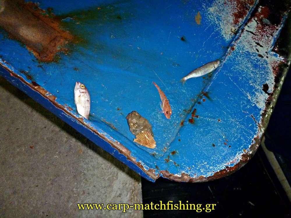 psaria se portes tratas petamena katastrofi carpmatchfishing