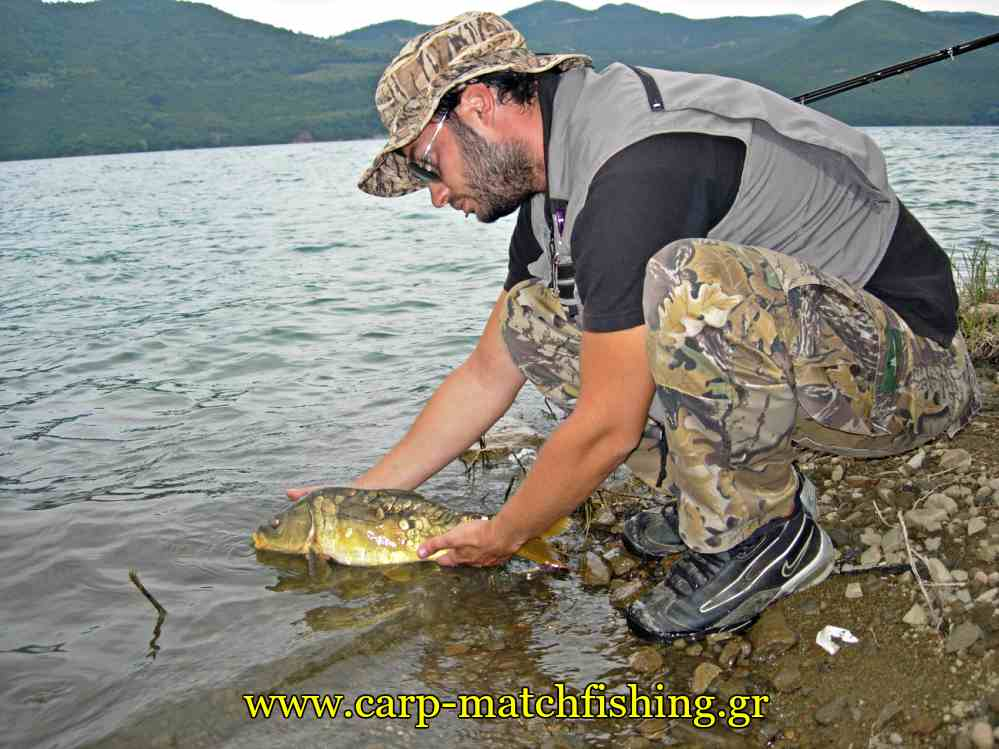 catch-and-release-carp-carpmatchfishing