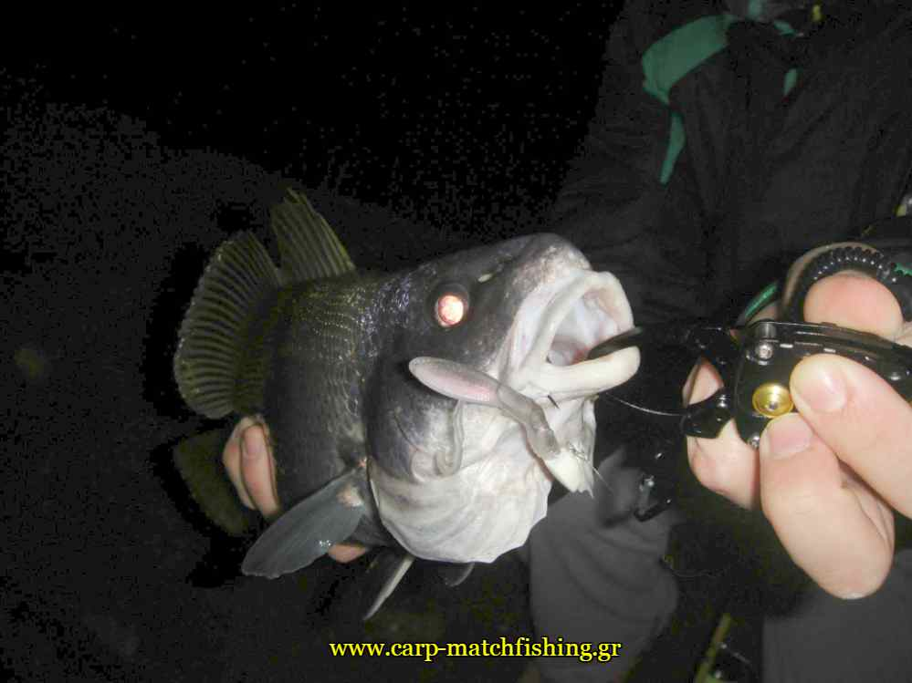 sikios-fishgrip-carpmatchfishing