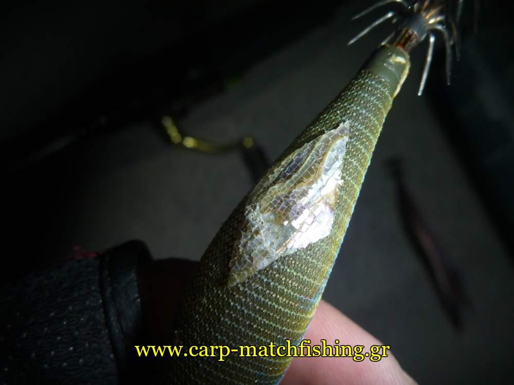 abalone-sheet-awabi-carpmatchfishing