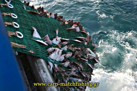 psaria petamena trates dixtya carpmatchfishing