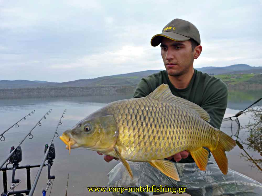 carp-foto-catch-and-release-tsiam-carpmatchfishing