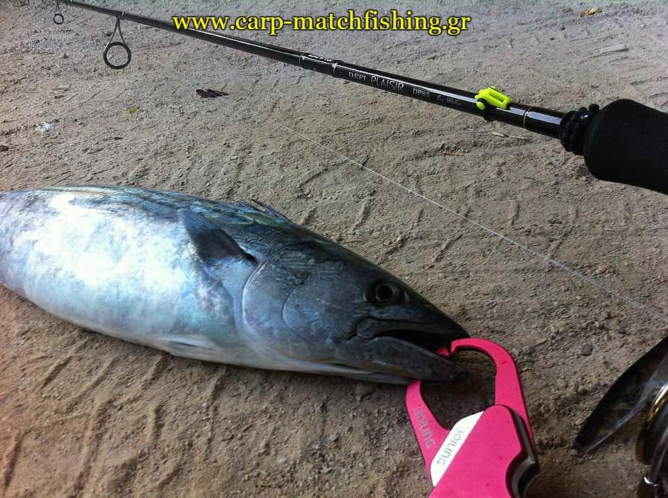 palamida-fish-grips-spinning-carpmatchfishing