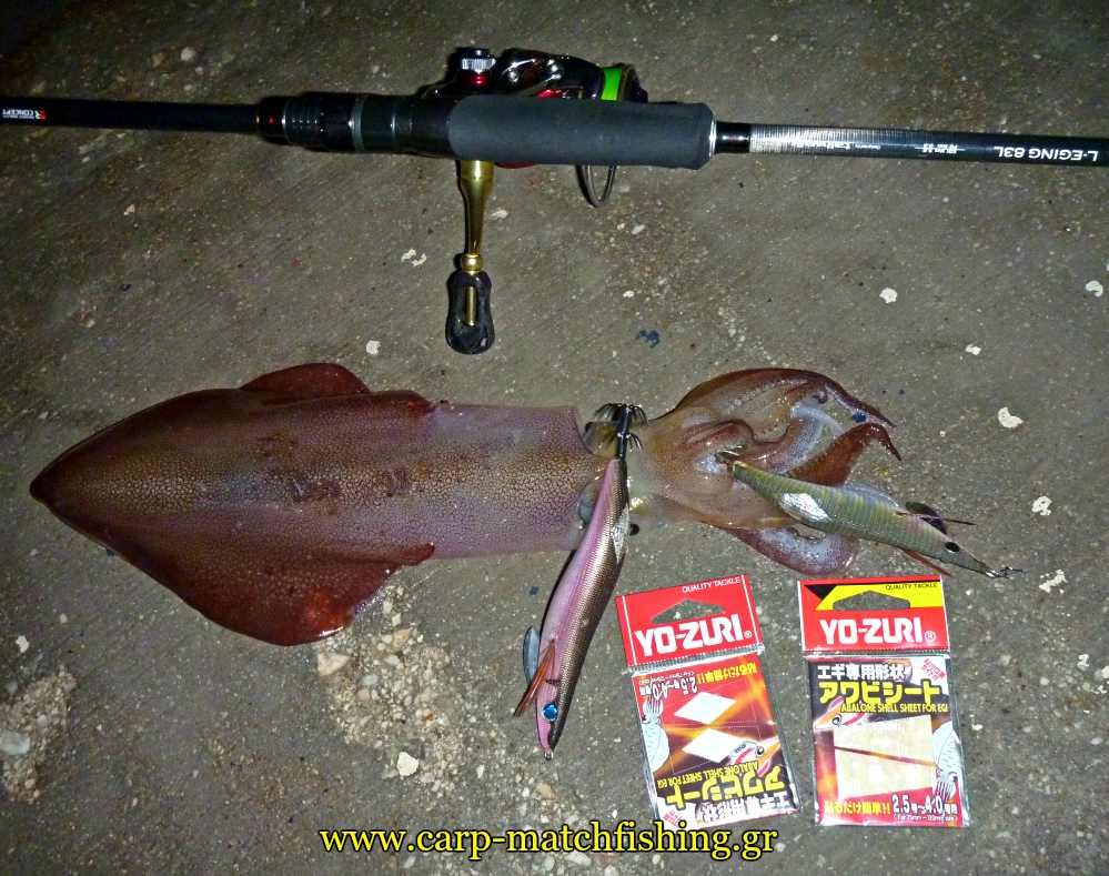 eging-abalone-sheet-awabi-pseftika-lepia-carpmatchfishing