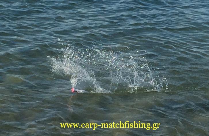 spinning-poppers-splash-l
