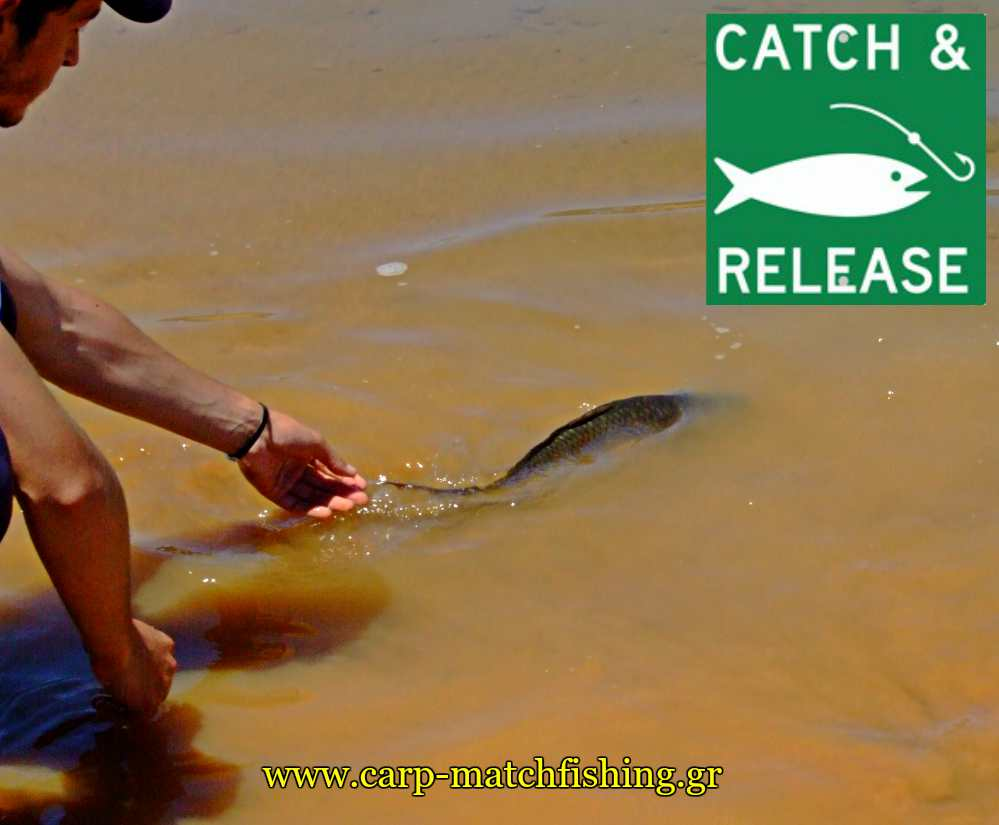 catch-and-release-carps-pl-carpmatchfishing