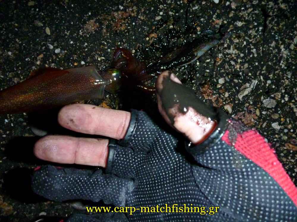 eging-inks-squid-hands-carpmatchfishing