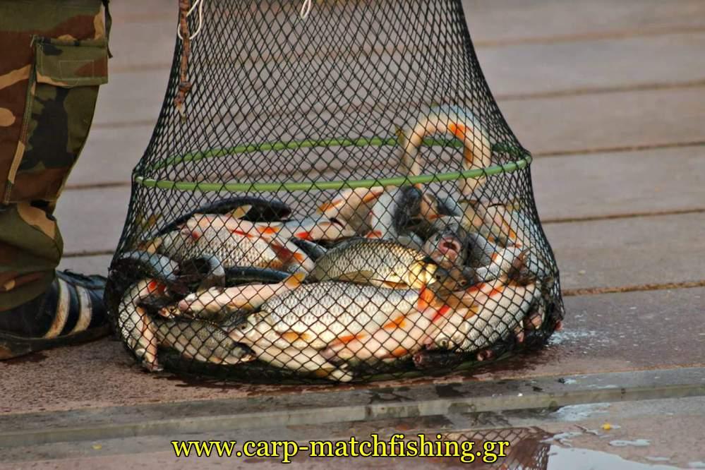 limni-polifitou-ntaouli-carpmatchfishing