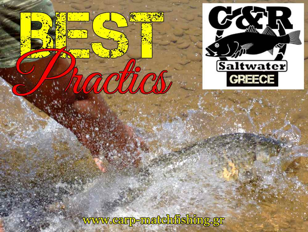 best-practics-for-fish-safety-catch-and-release-carpmatchfishing