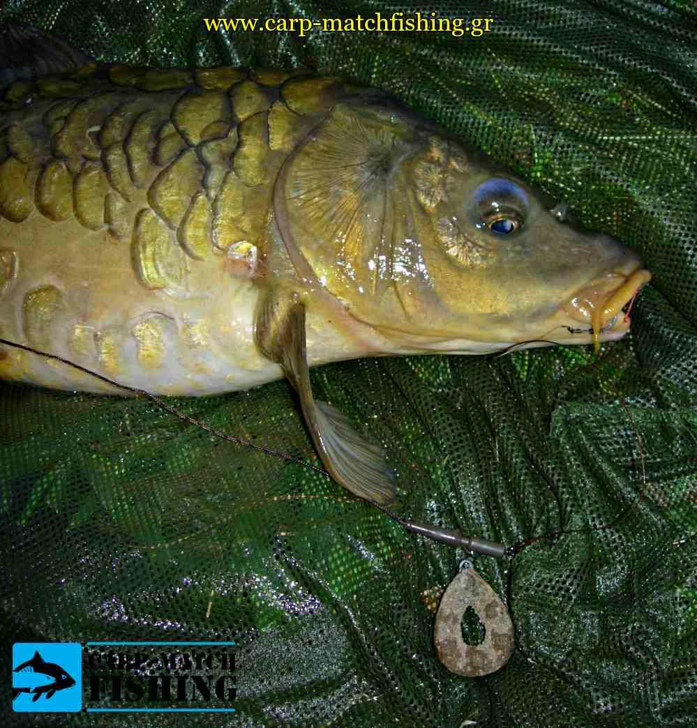 carp grip lead varidia psarematos carpmatchfishing