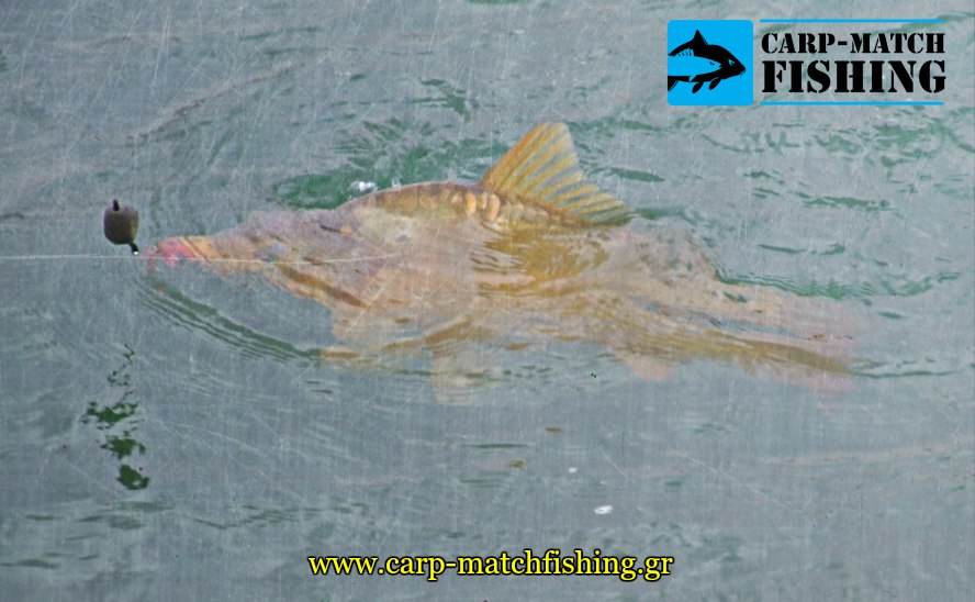 carp fishing leads carp carpmatchfishing