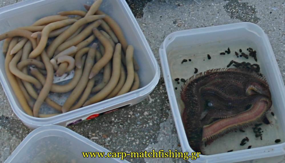 dolomata casting monodolia farao carpmatchfishing