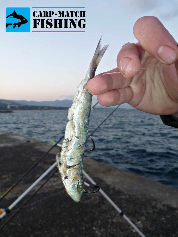 psarema palamidas dolomeno psarodoli carpmatchfishing