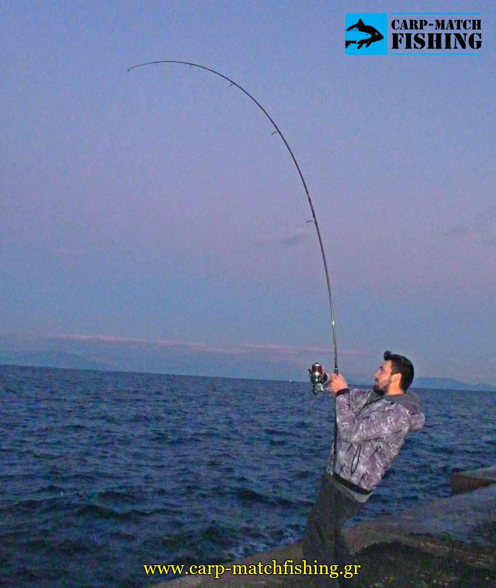 psarema palamidas rod fight carpmatchfishing