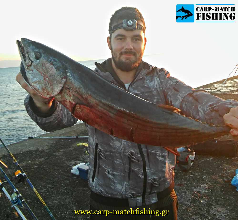 big palamida casting me fello predator carpmatchfishing