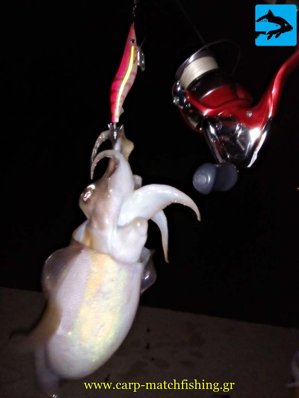 eging carpmatchfishing soupia cuttlefish yamashita k carpmatchfishing