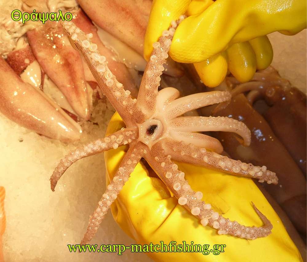 plokamia-thrapsalo-eging-carpmatchfishing.jpg