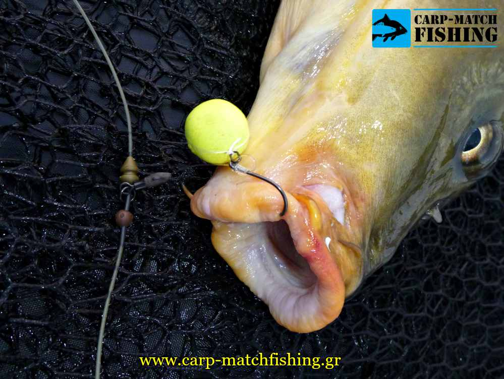 choddy hook korda carp carpmatchfishing