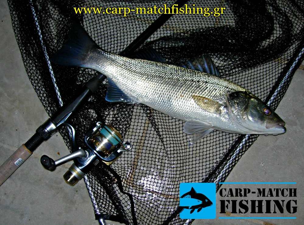 lavraki apoxi matchfishing zontani garida carpmatchfishing