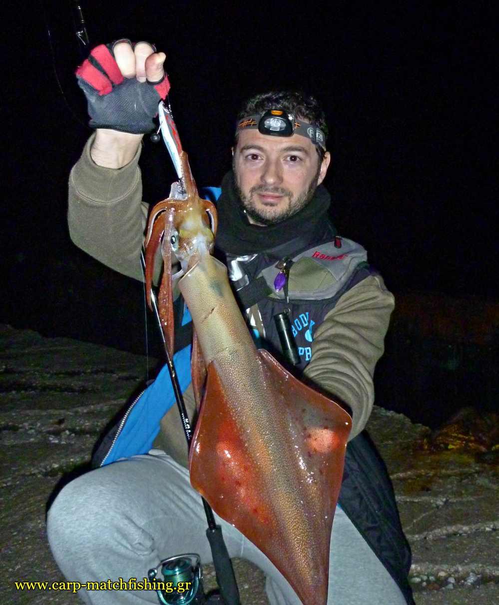 big squid sfaltos eging carpmatchfishing