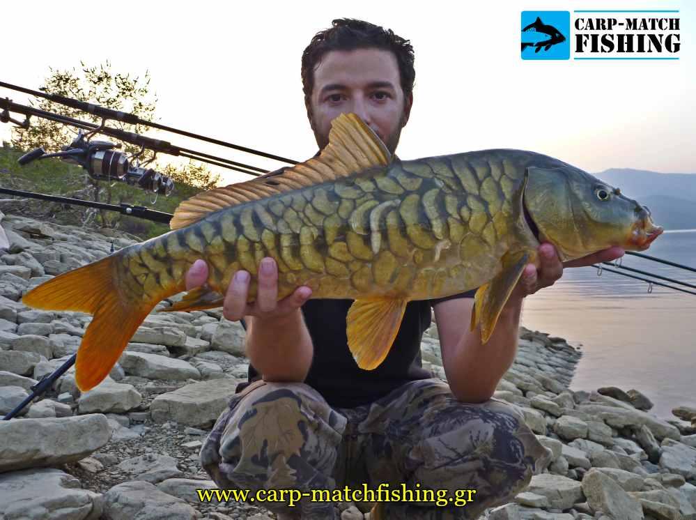 carp sfaltos epilogi agkistriou carpmatchfishing