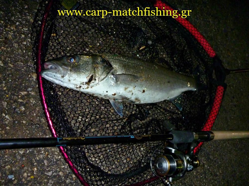 lavraki-apoxi-malagra-angry-fish-gfs-carpmatchfishing