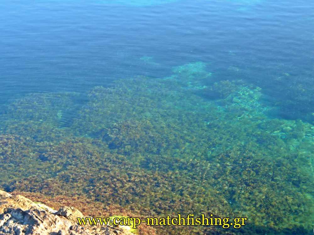 serifos-vithos-thalassa-carpmatchfishing
