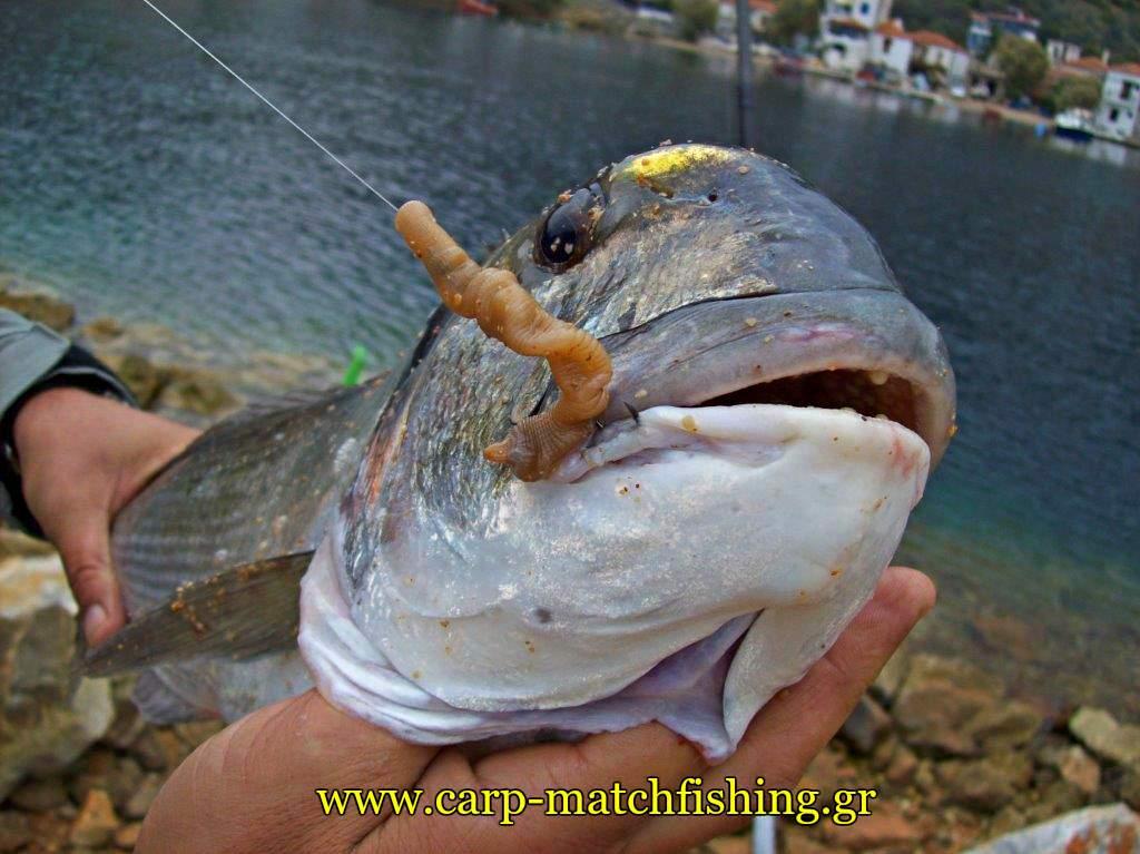trikeri-casting-tsipoura-monodoli-carpmatchfishing