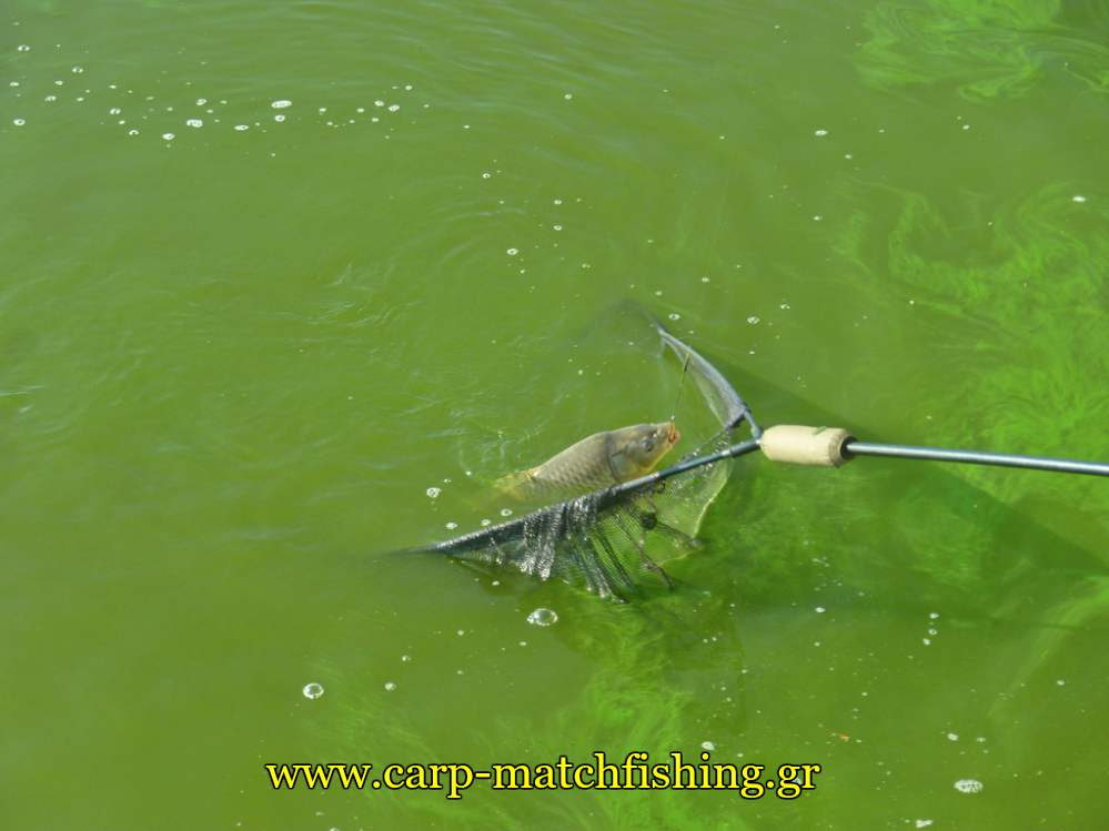 agonas-kuprinou-net-carpmatchfishing