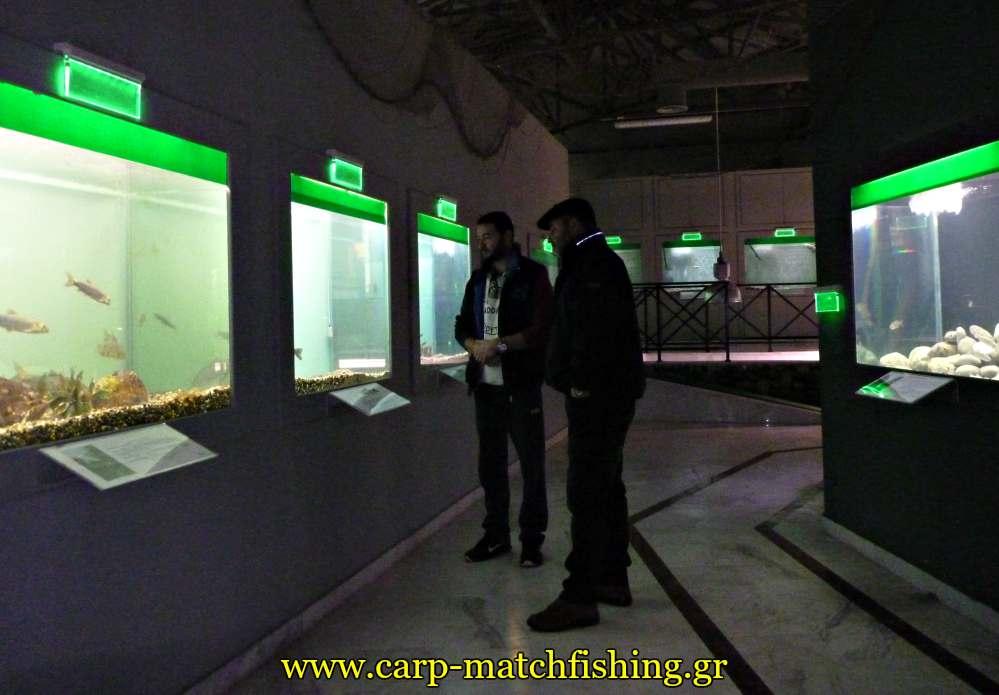 enydreio kastorias inside carpmatchfishing