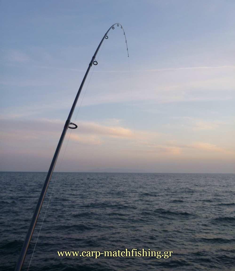 lrf-eging-paravoli-rod-carpmatchfishing
