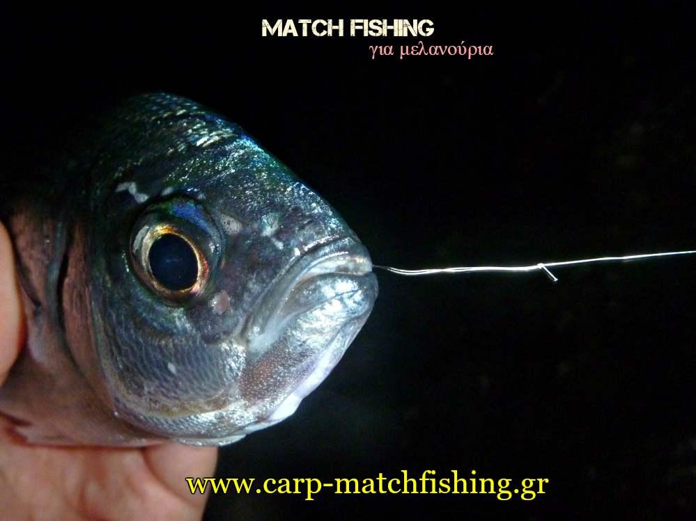 match-fishing-diplaromeno-paramalo-melanouria-carpmatchfishing