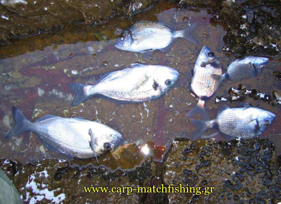 psaria-casting-nero-carpmatchfishing
