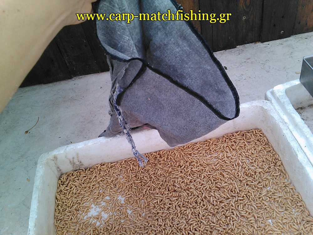 bigattino-katharismos-bag-carpmatchfishing