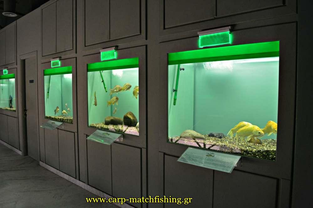 enydreio kastorias inside 4 carpmatchfishing