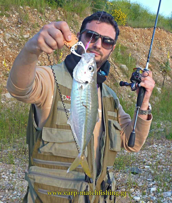 light-rock-fishing-for-horse-mackerel-carpmatchfishing