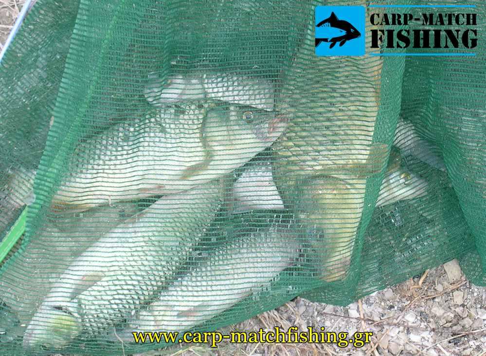 paranomi psaria kiprinon alvanoi dixtya carpmatchfishing