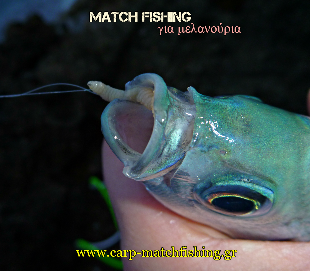 match-fishing-melanoyria-bigattino-carpmatchfishing